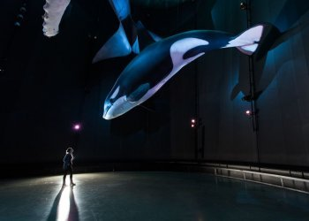 """Platz 2 """"Event und Messe"""": Die gemeinsam mit Greenpeace konzipierte Ausstellung 1: 1 Riesen der Meere im Ozeaneum Stralsund zeigt Nachbildungen von Meeresgiganten wie Blauwal, Buckelwal, Riesenkalmar, Orca oder Mondfisch im Originalmaßstab (c) Uli Kunz"""