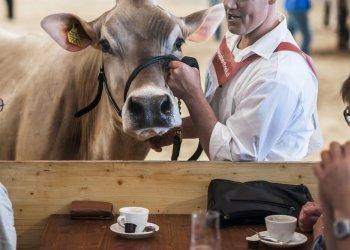 """Platz 3 """"Messe und Event"""": Die BEA ist mit rund 300 000 Besuchern und 1000 Ausstellern die grösste Publikumsmesse der Schweiz. Zum Angebot gehören neben den kommerziellen Bereichen auch Tierschauen und Schönheitswettbewerbe. Das Bild zeigt eine Momentaufnahme einer Rassenpräsentation von Schweizer Kühen vor breitem Publikum. (c) Damian Poffet"""