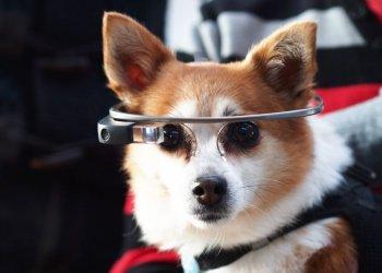 """Who made the dogs smart? Who who who"" / Ubimax GmbH, Mullumebet Berhanu Dilnesaw (c) Julian Tietje"