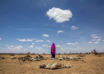 """Dürre in Somalia: Mit den Tieren trocknet die Hoffnung aus"" / CARE Deutschland-Luxemburg e.V. Ninja Taprogge (c) Georgina Goodwin"