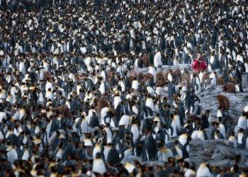 """""""Pinguine während einer Antarktisexpedition"""" / G Adventures c/o Kocherscheidt Kommunikation, Karolin Turck (c) Gary Arndt"""