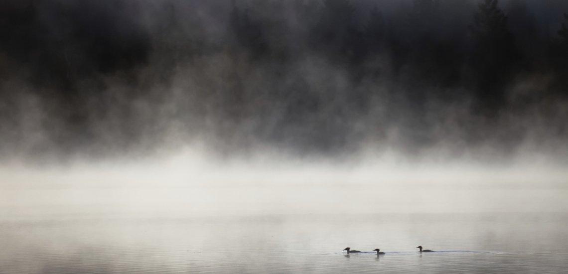 Über der Diskussion liegt ein Nebel der Unklarheit (c) Thinkstock/ Igor Kovalenko