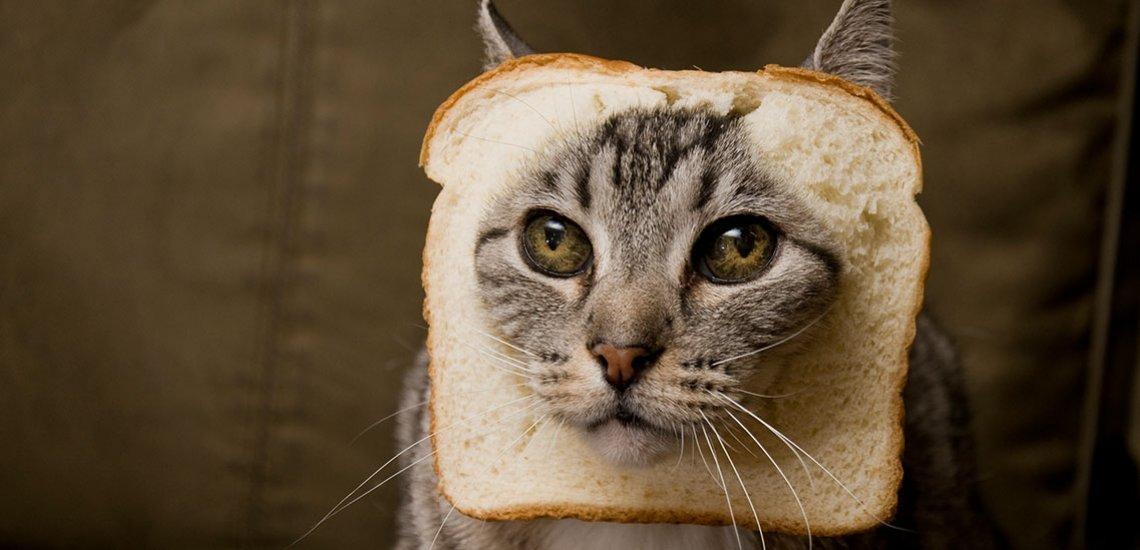 Wer Katzenvideos in seiner Chronik hat, liest politische Nachrichten aufmerksamer./ Katzen: (c) Getty Images/ LCLPhoto