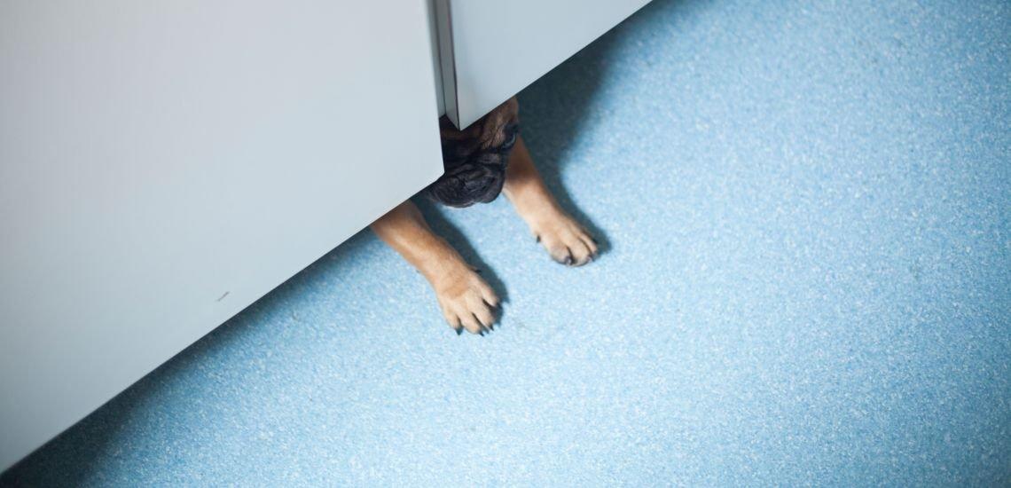 Auch in der Employer-PR ziehen ungewöhnliche News. (c) Getty Images / bitenka