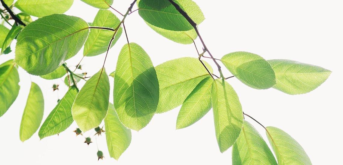 Wer in puncto Nachhaltigkeit und Klimaschutz gut kommuniziert, hat Unicepta untersucht. (c) Zhen Hu / Unsplash