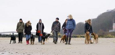 """Ein Spaziergang mit der """"Elbrudel""""-Raufergruppe mit Hundetrainerin Lena Tangermann (c) Oliver Fantitsch"""