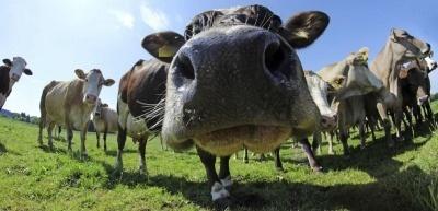 """""""Milch"""" kommt künftig nur noch von der Kuh und anderen Tieren, entschied der Europäische Gerichtshof. Pflanzliche Produkte dürfen die Bezeichnung nicht mehr tragen. (c) Thinkstock/Astrid860"""