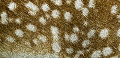 Sp präsentiert sich Bambi im Netz (c) Getty Images/iStockphoto/aetb