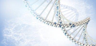 Als Markenvertreter sollte man die DNA der Marke verinnerlichen (c)  Thinkstock/cherezoff