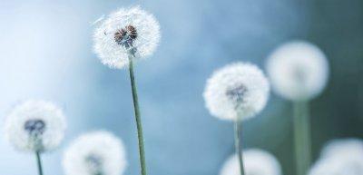 Vom Zusammenbringen der Lebenden und der Toten (c) Getty Images/iStockphoto