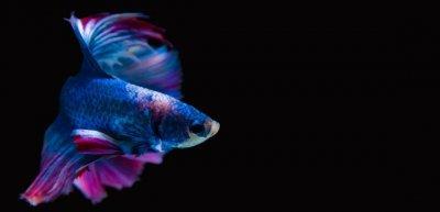 Superfische sind diejenigen, die Ihnen auf Ihrem Gebiet ein kleines Stück voraus sind. An ihnen gilt es sich zu orientieren. (c) Thinkstock/Genesis02