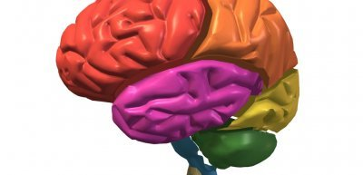 Was passiert in unserem Gehirn, wenn wir Marken lieben oder hassen? (c) Thinkstock/Purestock