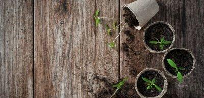 Spontaneität erweckt ein Video erst wirklich zum Leben. Das kann auch schon einmal eine umfallende Topfpflanze sein. (c) Thinkstock/MementoImage