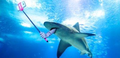 Durch Selfies kamen zwischen 2011 und 2017 rund fünf Mal so viele Menschen ums Leben wie durch Hai-Angriffe. (c) Getty Images / bennymarty