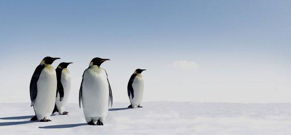 Erwartungen müssen von Anfang an geklärt werden, dann gelingt auch die Führung ohne Personalverantwortung. (c) Getty Images/Coldimages