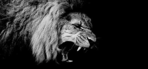 Nicht jeder brüllt wie ein Löwe. Wie man eine Rede schreibt, hängt auch davon ab, wie sicher der oder die Vortragende ist. (c) Getty Images/Matthäus Rojek
